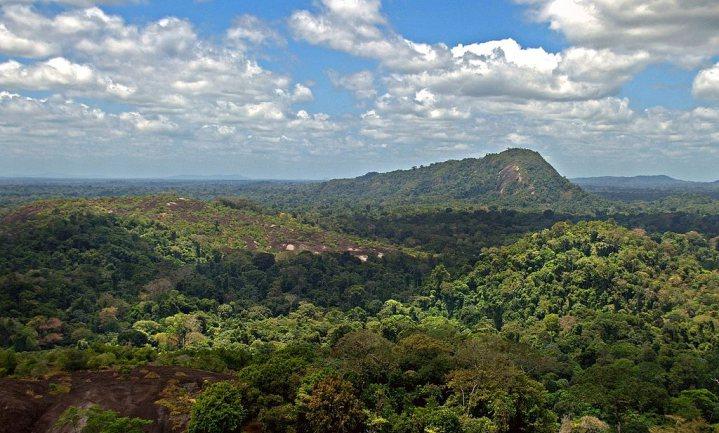 Tropisch bos slaat minder koolstof op bij hitte