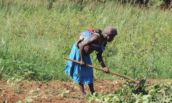 'Wieden onkruid kost Afrika 1,5 keer zoveel als de totale economie produceert'