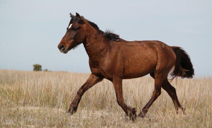 Paarden en ander onbenoemd vlees in Amerikaans gehakt