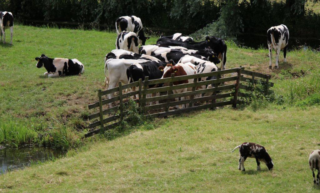 AMVB remt niet-grondgebonden groei melkveehouderij