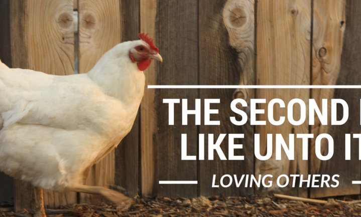 Pas op: 'niet kussen met kippen!'