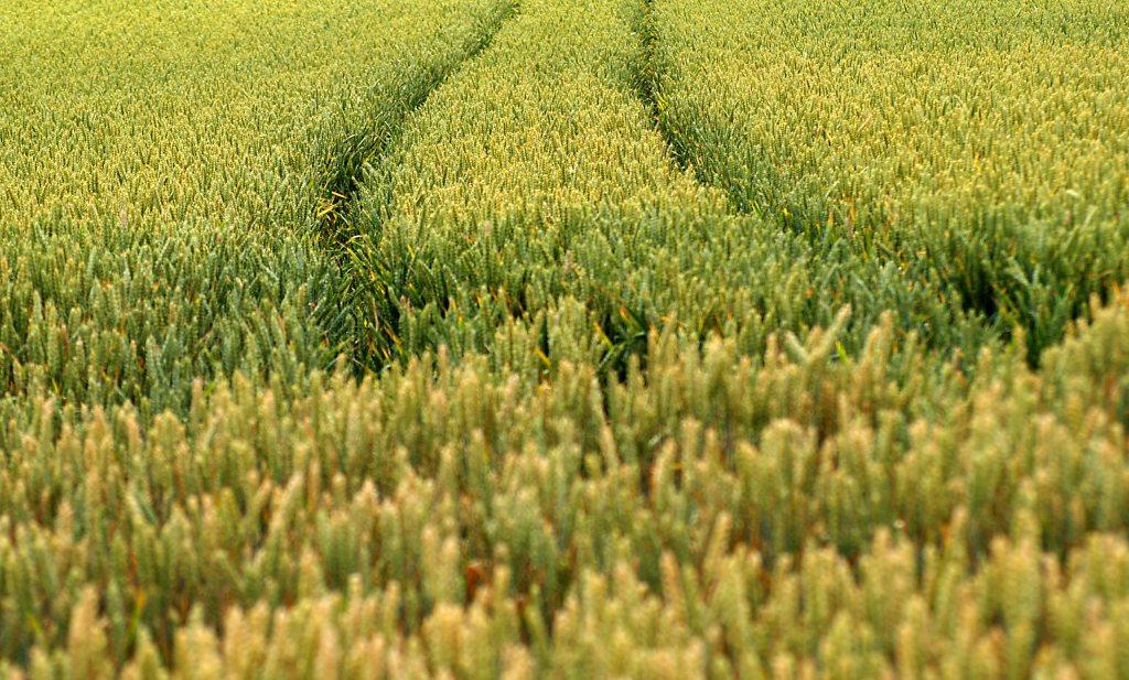Kamp en LTO kapittelen CDA: 'landbouw draait om export'