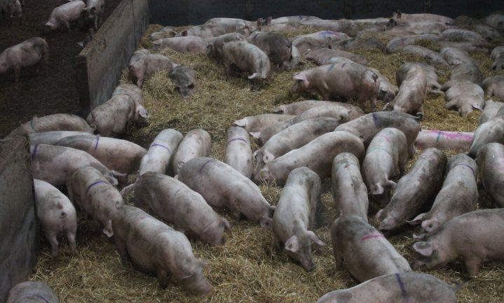 Tweede Kamer wil 'transparantie' over dierhouderij, maar zegt niet hoe