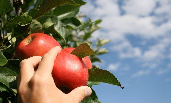 Culinair Ontdekt: Appel