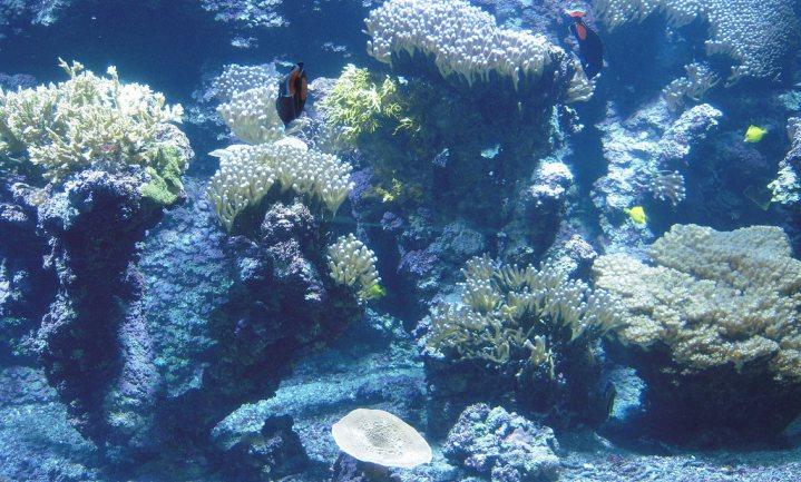 Danone investeert in Hawaïaans zeewater van smeltende gletsjers