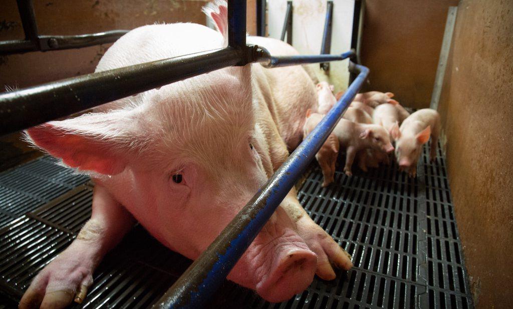 Overheid besluit tot gebiedsaanpak diertallen