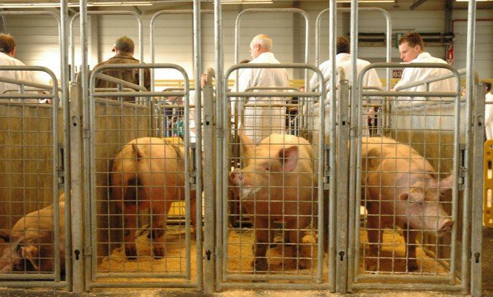 'EU moet varkenscrisis oplossen'