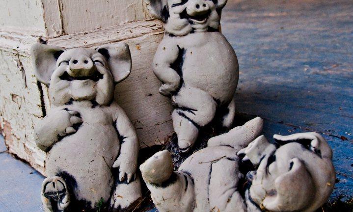 Deense industrie krimpt verwerking varkens in