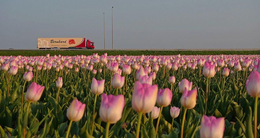 'Nederland heeft mooiste tuin van Europa verknoeid'