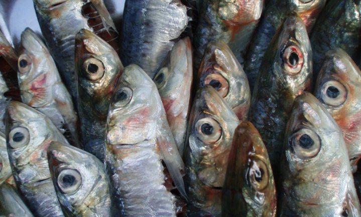 Vissenvoer op, oorzaak onbekend