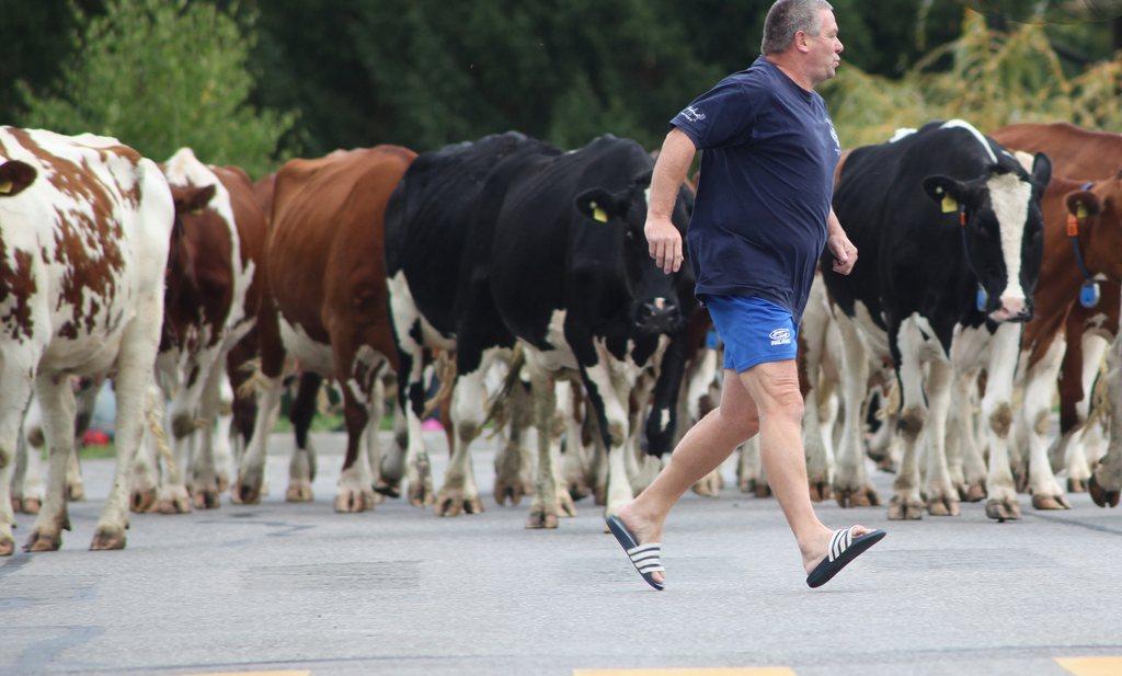 Boeren mogen blijven van Nederland