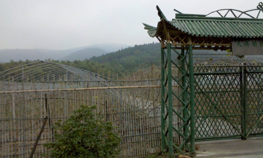 Chinese wijngaard groter dan Franse