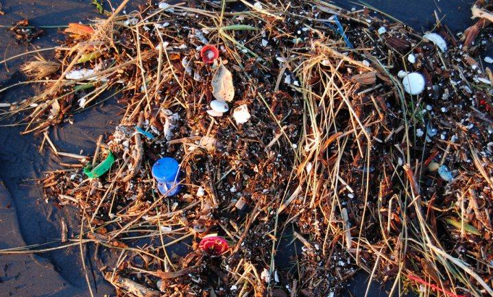 Plastic stuurt zeedieren op wereldreis