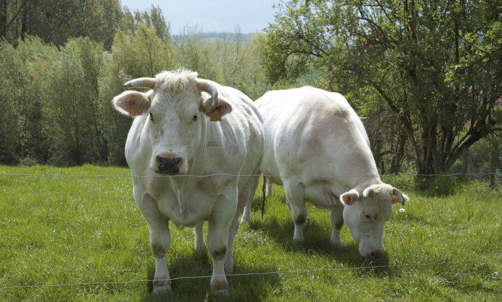 Böll Stichting publiceert alarmerend klinkende Vleesatlas van de Wereld