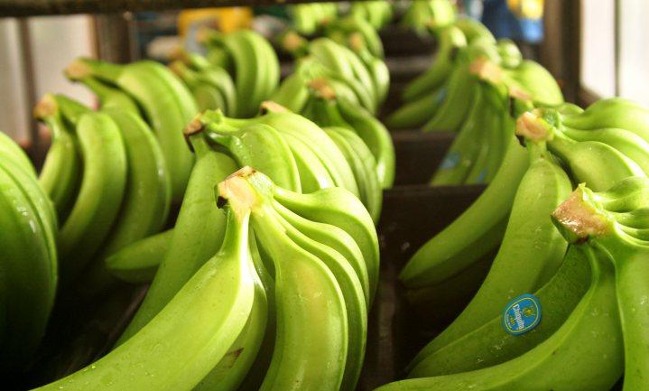 Lidl gaat over op 'groene' bananen