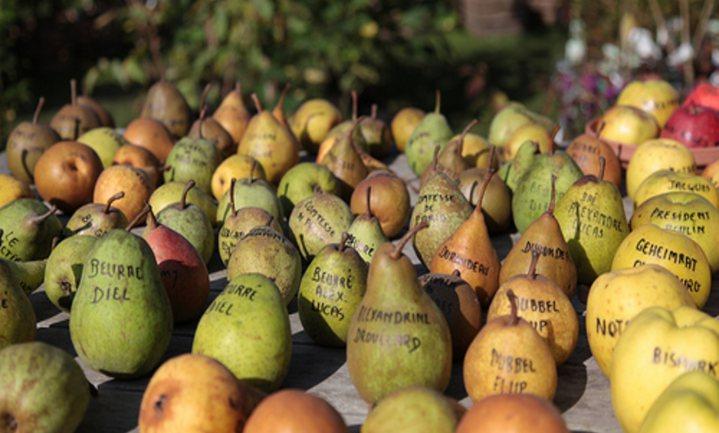 Verkoop peren in België verdubbeld
