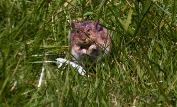 Dijksma bij EU voor muizenbestrijding 2015/16