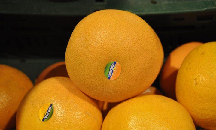 Rusland stuurt in Nederland omgekatte grapefruits terug