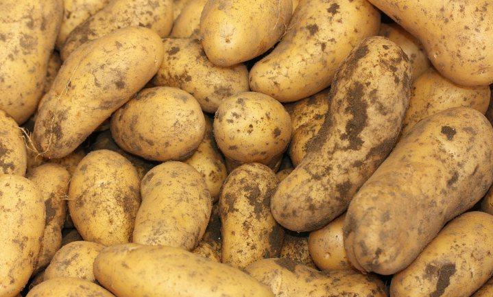 Voor een kilo friet zijn bruto 2 kilo aardappelen nodig - waar blijft de rest dan?