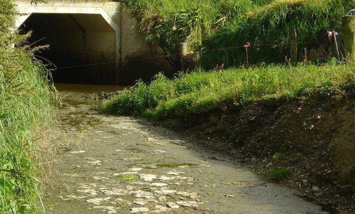 (Kunst)mest in het water funest voor watermilieu