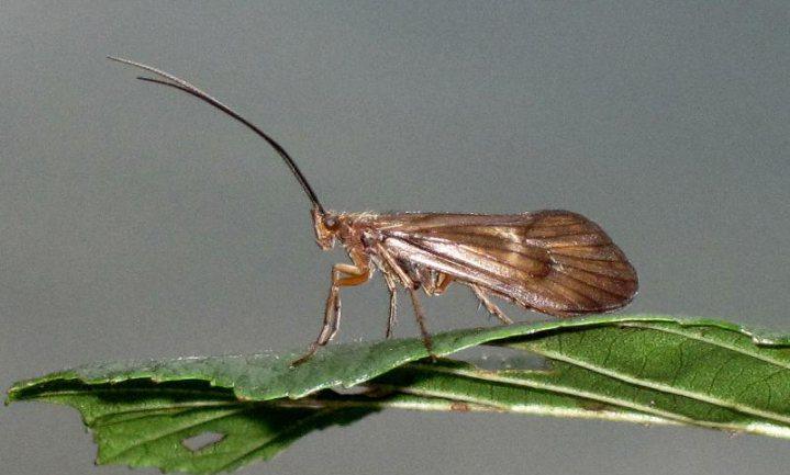 Insectenafname is echt waar