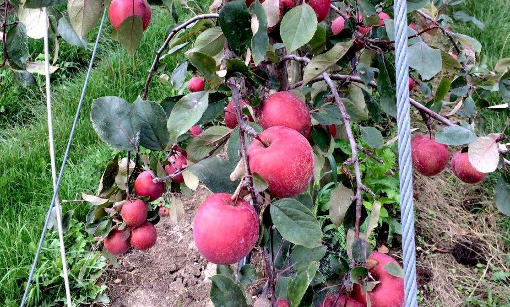 Culinair ontdekt: Appelsoep