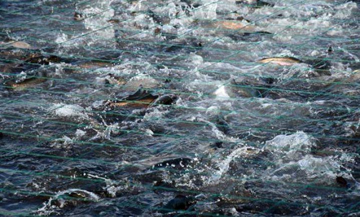 Denemarken bevriest uitbreiding viskweek in zee