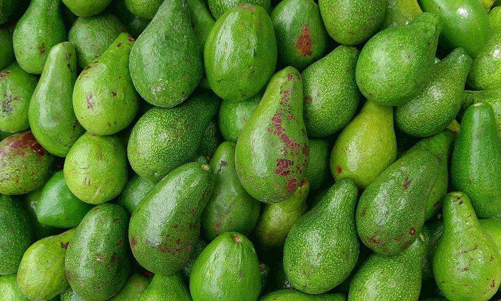 Nederland na VS grootste importeur avocado's