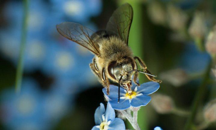 Milieudefensie wil grondgebonden biologische kringloop als grondslag voor de Nederlandse landbouw