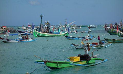 Vistekorten in 40% van landen wereldwijd door klimaatopwarming en overbevissing