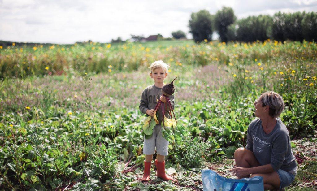 Laat je kind groente oogsten bij de boer