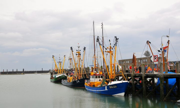 België ving nog nooit zo weinig vis en daarom moet de Belg voor eigen vis kiezen