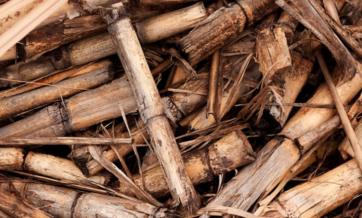 Elf keer tegen biomassa en verder