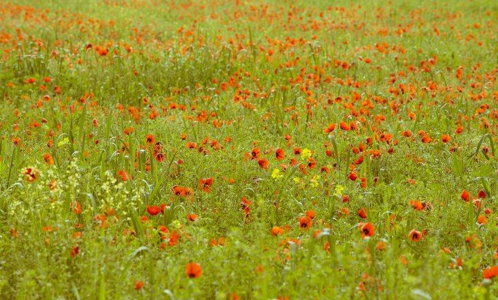 Kan een goede boer natuurinclusief worden?