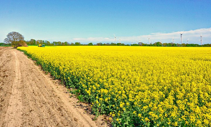 Bekende Vlamingen worden even boer