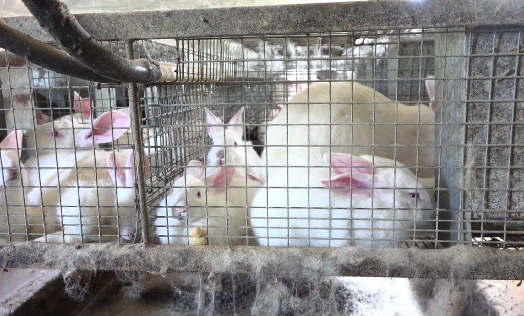 CIWF wil konijnen weer laten springen
