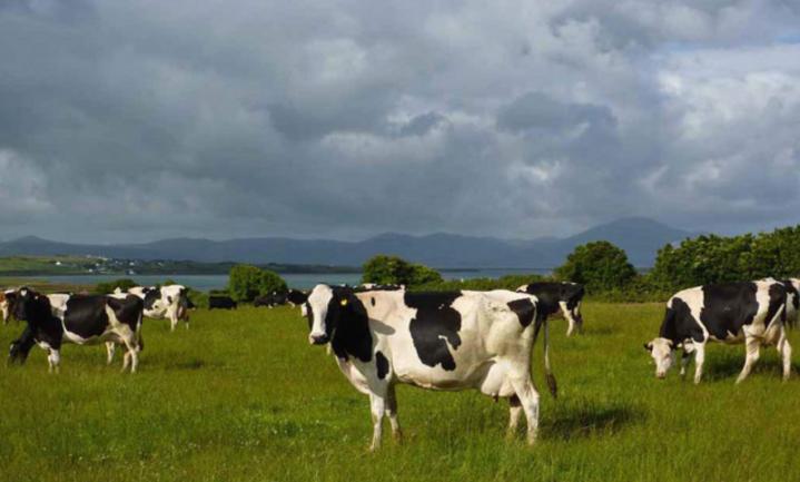 Lidl mag in Noord-Ierland verpakte melk niet als Ierse verkopen