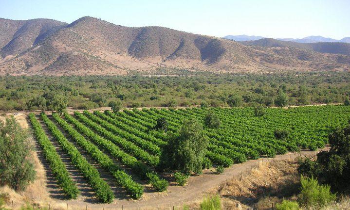 Bosbranden Chili verwoesten 100 Maule-wijngaarden