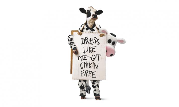Eet kip, want vandaag is het feest voor de koeien