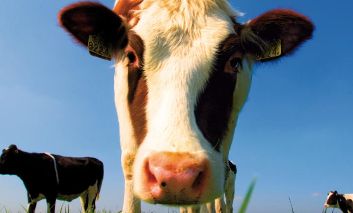 Dierenbescherming wil weidegang voor margarine