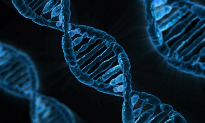 Doorbraak in biotechnologie: gistcellen puzzelen zelf synthetisch chromosoom in elkaar