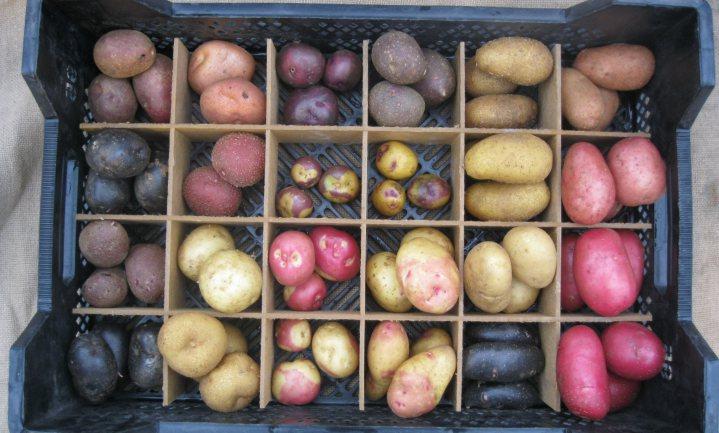 Rob de Wijk: 'Landbouw is van grote strategische waarde voor Nederland'