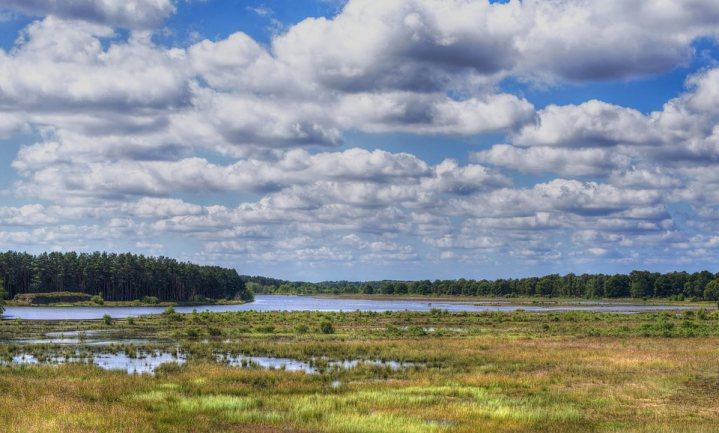 Nederland bestaat nog altijd voor 54% uit boerenland, maar de natuur krijgt wat meer ruimte