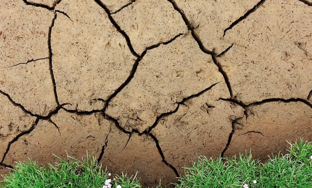 Nederlandse overheid weinig scheutig met droogtesteun