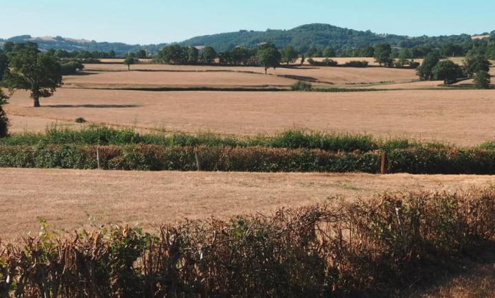 Franse boeren met weersverzekering dienen massaal schadeclaims in