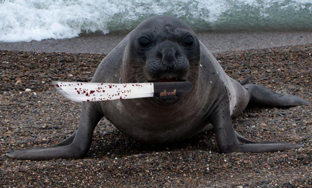 Experimenteel knuppeltje in het hoenderhok: zeevarkens gaan houden