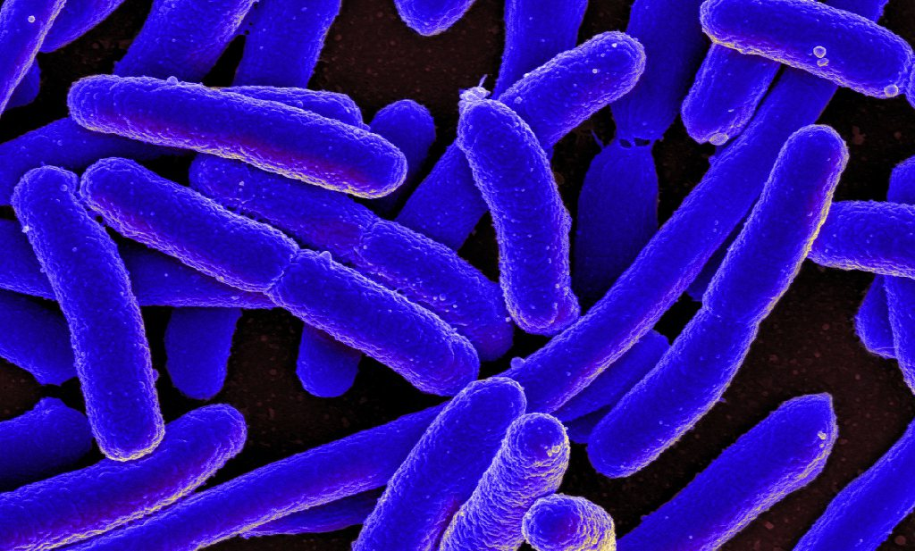 Supersnelle detectie van E.coli in drinkwater