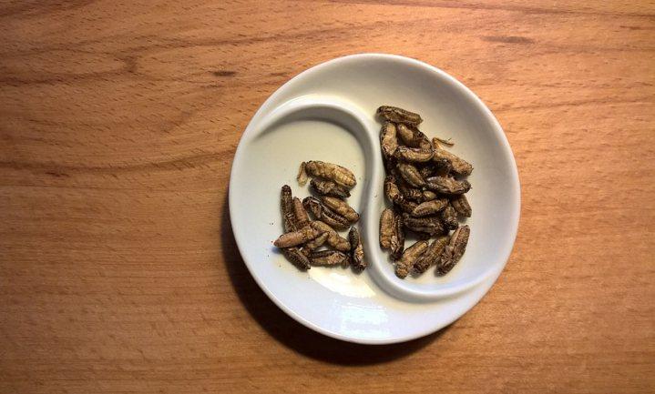 'Vreemde taal maakt vreemd eten lekkerder'