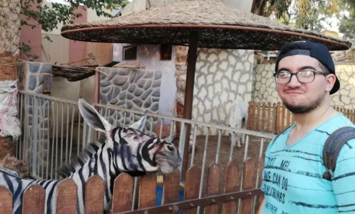 Een ezel in zebrapak