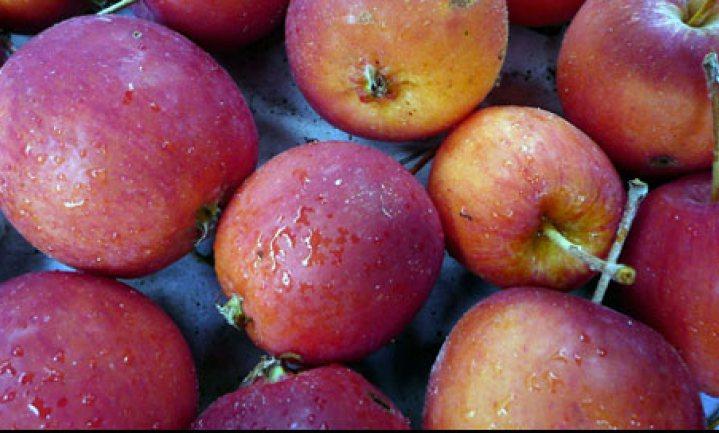 Foodlog geeft appeltjes